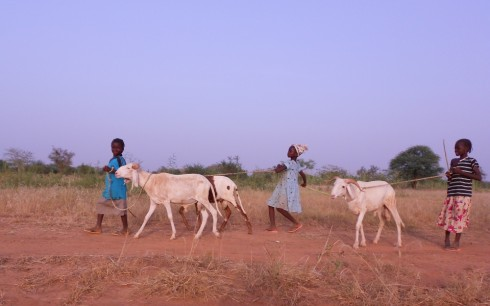 Shepherd girls with their sheep in Burkina Faso