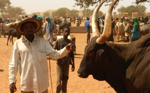 Siita Tal and his fine black bull in Djibo cattle market in Burkina Faso